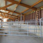 koeien loopstal in Nes